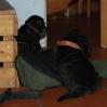 OpasBettKimi1a_20091028