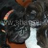 AlleSchaf_20091104a