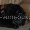 FelaKandoa_20091101