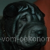 Kimi8a_20091112