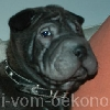 Kwintus9a_20091112