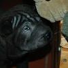 Kadriye3a_20091118