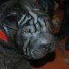 Kaija6a_20091118