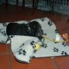 Kwintus2a_20091115